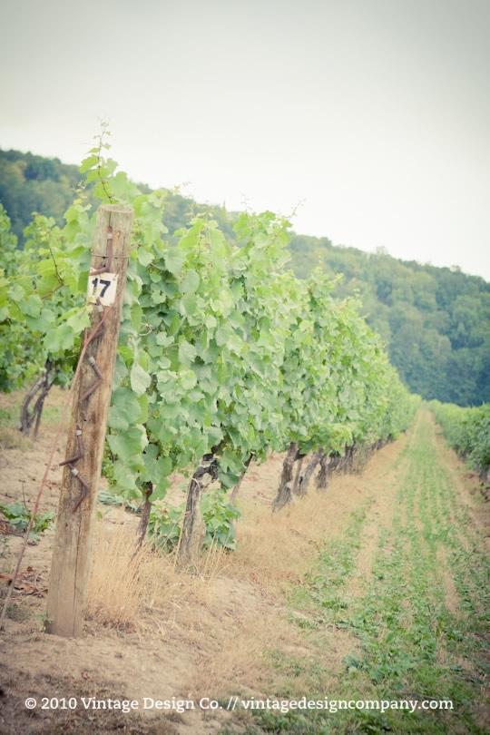 Niagara Wedding Florist // Cave Spring Vineyard Retreat